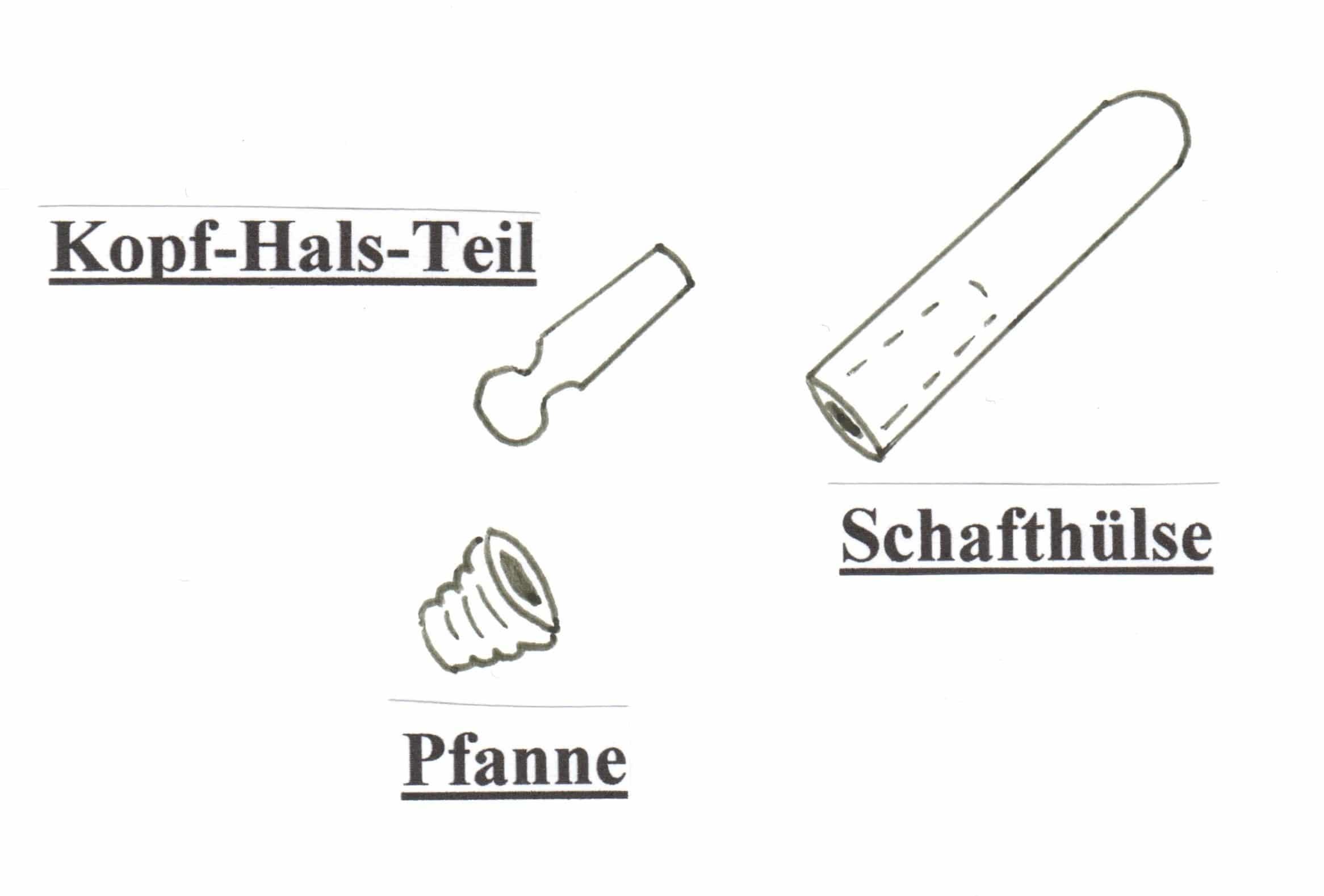 Schön Akkreditierte Anatomie Und Physiologie Klassen Online Bilder ...